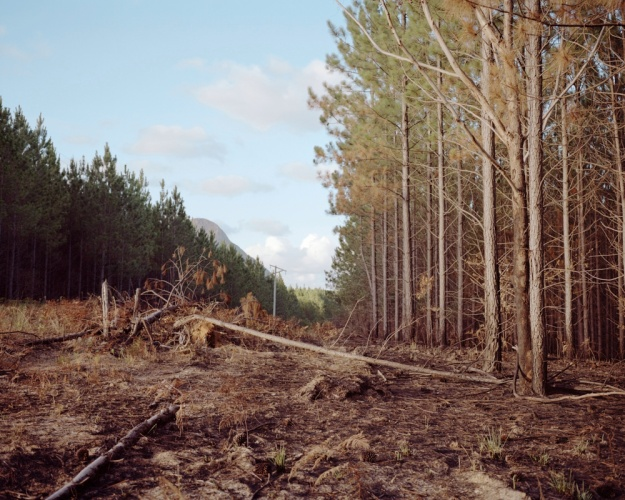 © Katrin Koenning, Beerburrum State Forest #1 (You used to ride your bike through Here) from Dear Chris, 2013