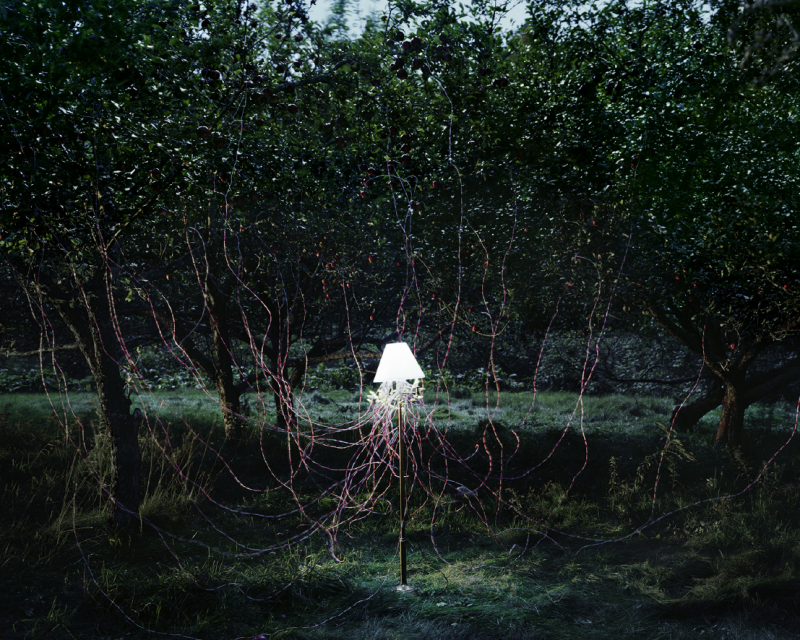© Caleb Charland - Apple Trees & LEDs, 2011 /  from his series Back To Light